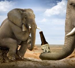 Ингредиенты пива. Пятый элемент